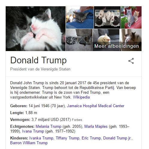 Make America Kittens Again