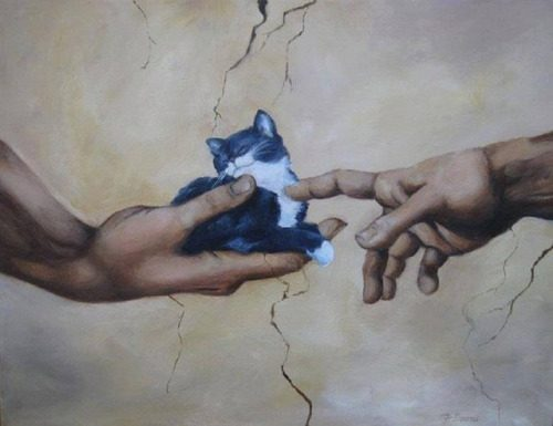 Michelangelo kat