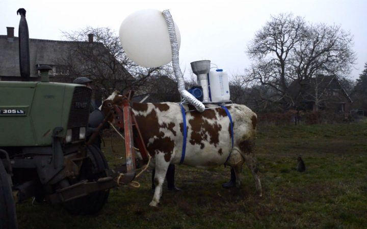 Nieuwe uitvinding: Koe op toernee