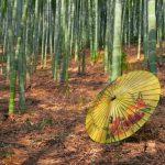 Oliepapier paraplu