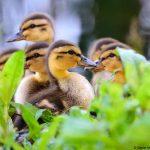 Help Dr. Duck een mysterie te ontrafelen