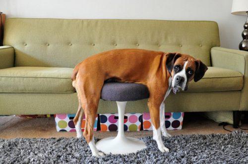 dieren en meubilair