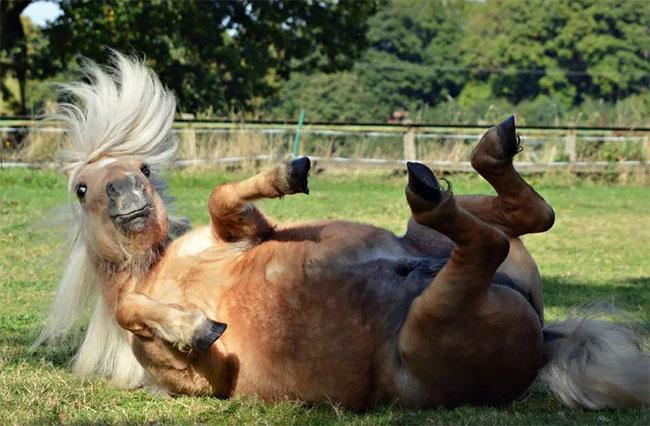 komisch paard