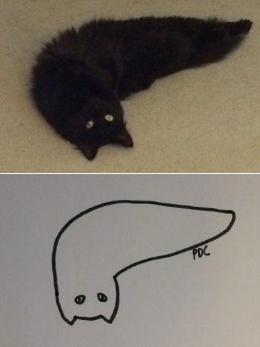 tekening van een kat