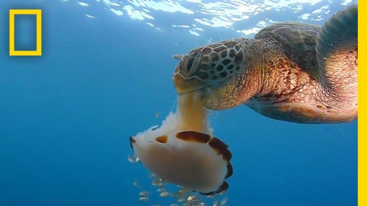 Zeeschildpad verorbert kwal