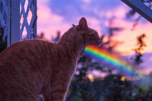 regenboog spuwende kat