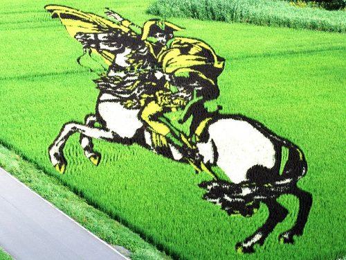 rijstveld kunst