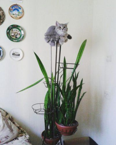 kattenplant