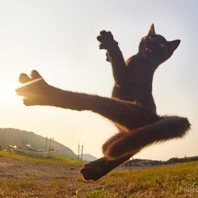 actiefoto's van katten
