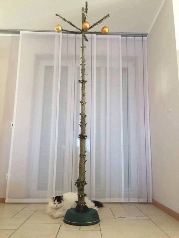 Bescherm je kerstboom tegen huisdieren