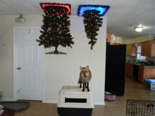 kerstboom aan het plafond
