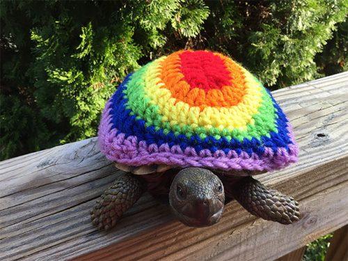 schildpad mode