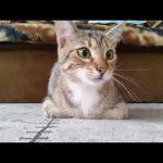Kat kijkt een horror film
