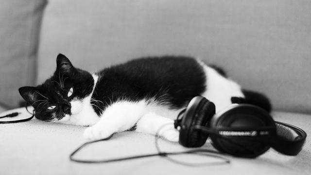 Muziek voor katten: drie kattenliedjes