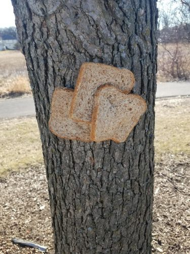 brood vastnieten