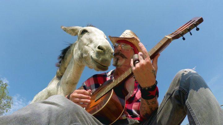 Ezels zijn dol op muziek
