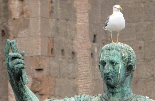 vogelpoep