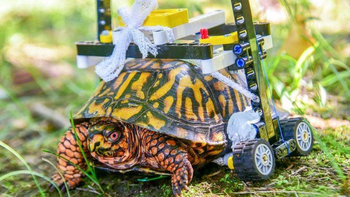 Gewonde schildpad 'gerepareerd' met Lego