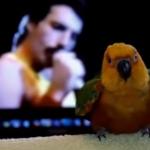 Dansende papegaai