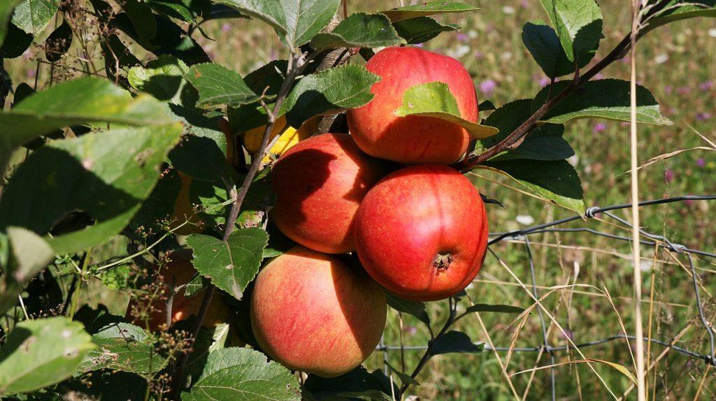 fruitbomenactie