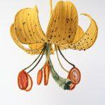 Planten breien: de botanische kunst van Tatyana Yanishevsky