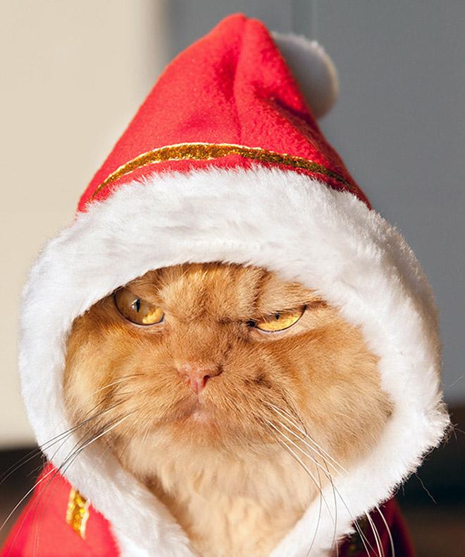 geen zin in kerstmis