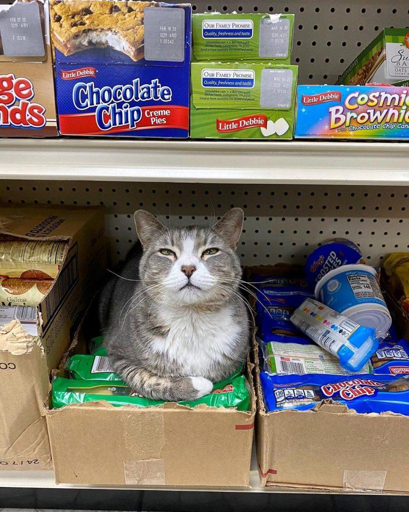 Kat in de supermarkt