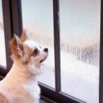 Vanachter het raam