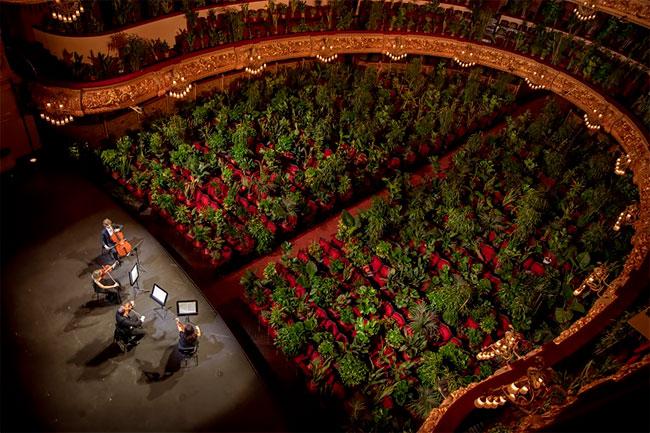 I Crisantemi: Concert voor kamerplanten
