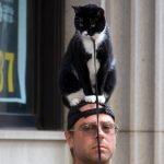 Zijn mannen met katten aantrekkelijker?