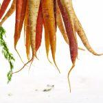 Wortelmuseum brengt een ode aan de veelzijdige wortel