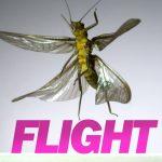 Opstijgende insecten in slow motion