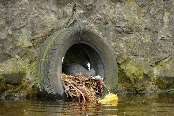Meerkoetnest van plastic afval