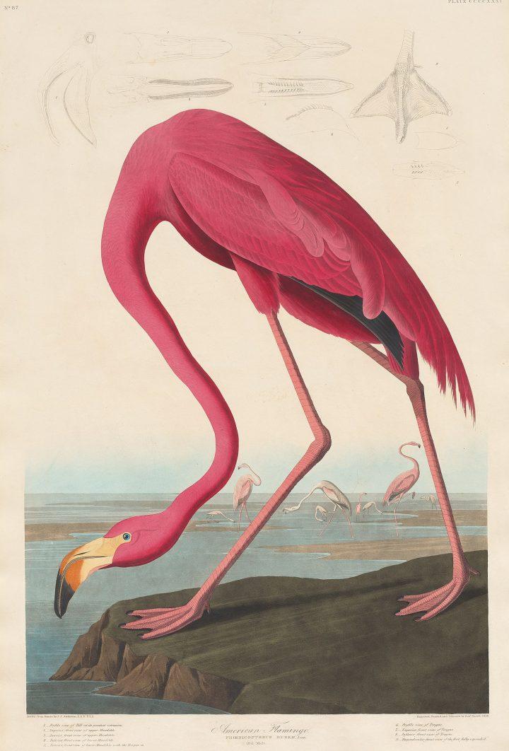 Vogelpracht in het museum